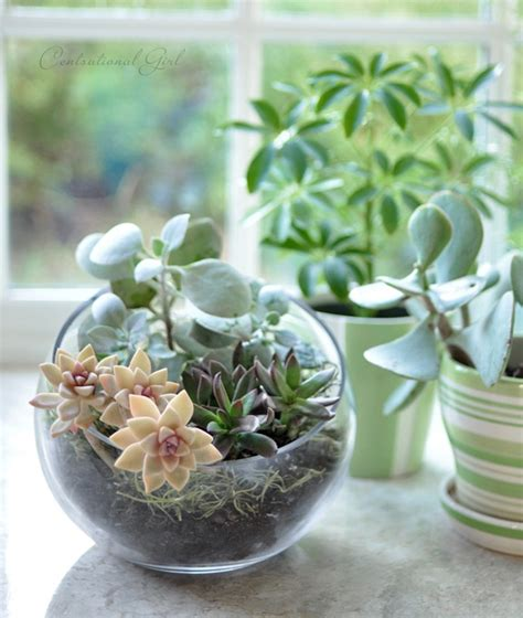 Kitchen Window Terrarium | terrariums around the house centsational girl