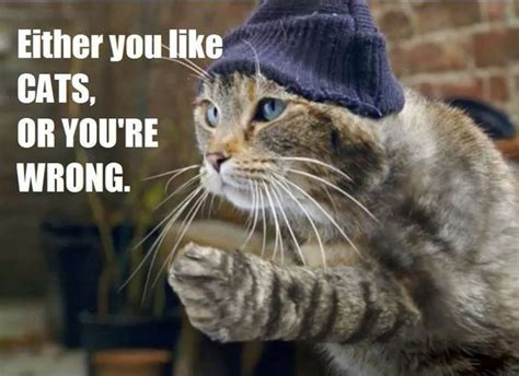 top  thug life cat memes quotes  humor