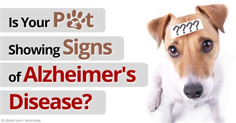 cognitive dysfunction in dogs 9 step plan to fight cognitive dysfunction in pets