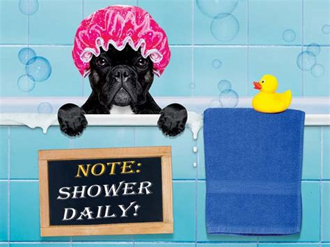why is it important to shower every day boldsky