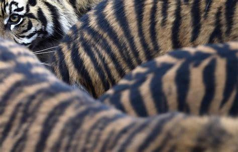 animal pattern photography the natural world animal patterns the boston globe