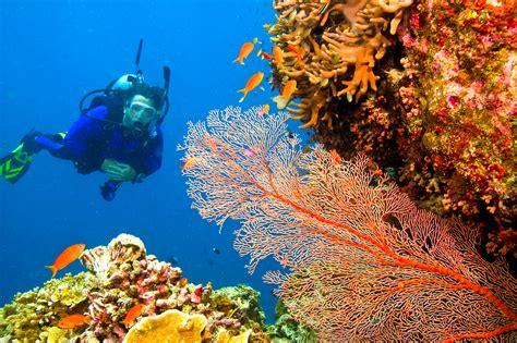 dive di scuba diving in goa adventure nation