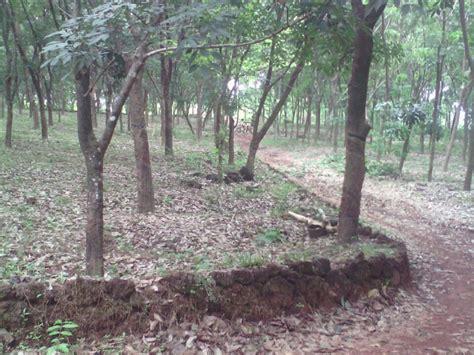 rubber st plantation rubber plantation for sale in vellarivayal kannur