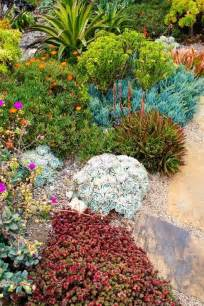 rock garden succulents gardening and flowers pinterest