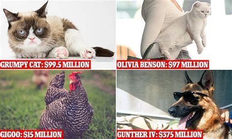 The richest pets in the world: Gunther IV, Grumpy Cat