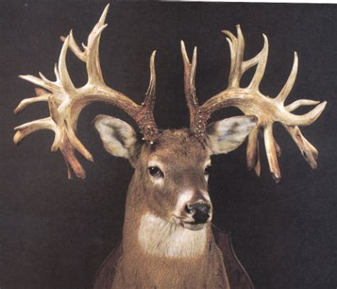 Missouri Records Origin Of This Big Buck Kentucky