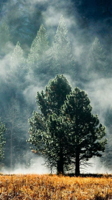 fog iphone  wallpaper hd  nature iphone