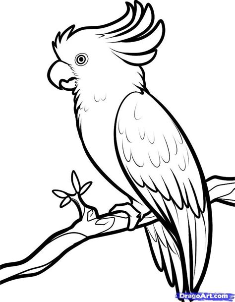umbrella bird coloring page az coloring pages