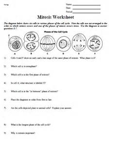 Cell concept map answer key on mitosis and meiosis worksheets answers