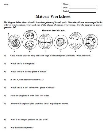 Mitosis Worksheet And Diagram Identification Answers by Diagram Mitosis Worksheet Answers Key Diagram Free