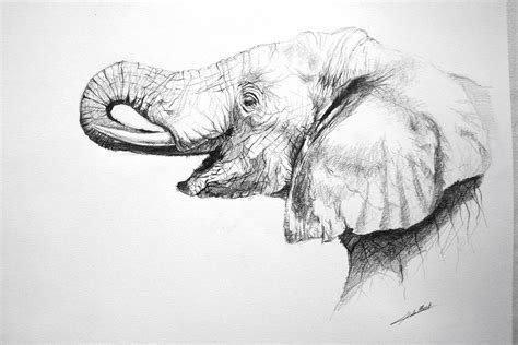 Tete Elephant Profil by Dessin Dessin D Elephant Profil