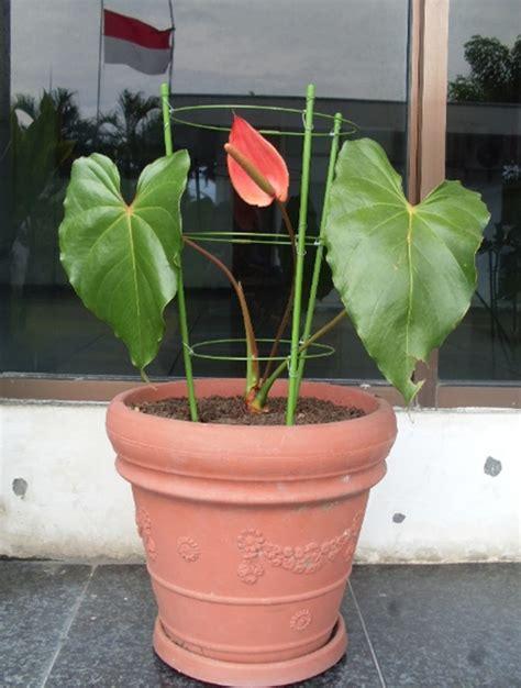 Penyangga Tanaman Powerful 45 Cm penyangga tanaman powerful no 6 60 cm bibitbunga