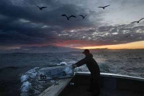 lobster boat sternman daybreak at sea lobstermen get to work at early light