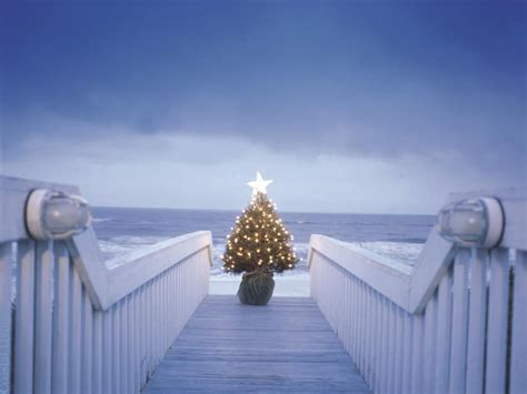 lonely christmas tree sarahplove wallpaper  fanpop