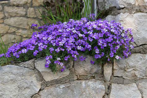 piante ricanti da vaso piante da bordura perenni pin piante perenni da frutto