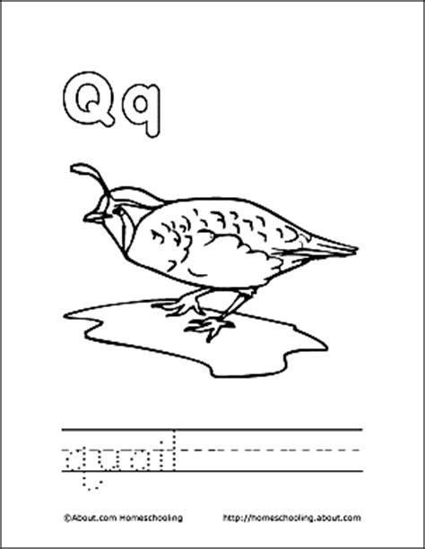 quail coloring page preschool alphabet letter template letter q preschool is for quail