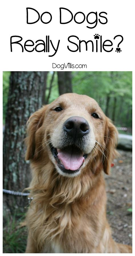 do dogs smile dogs smile find out the to this behavior dogvills