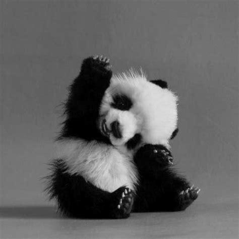 wallpaper black and white panda lonelysoumia images black and white panda wallpaper and