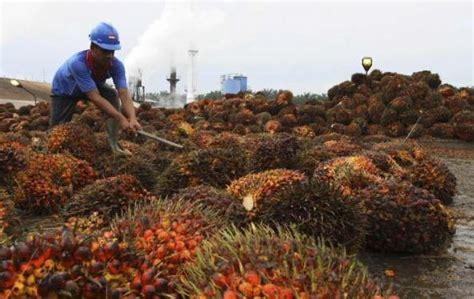 Ekspor Minyak Kelapa Sawit pemerintah akan mengurangi ekspor minyak sawit