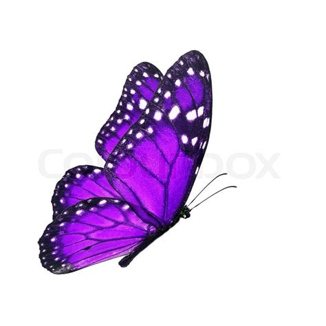 Most Popular Home Plans by Beautiful Purple Butterfly Flying Isolated On White