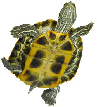 desain aquarium kura kura yang penting share 2011 just bloggerzine