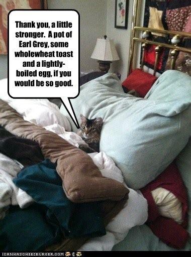 sick in bed meme feeling any better sicko lolcats lol cat memes