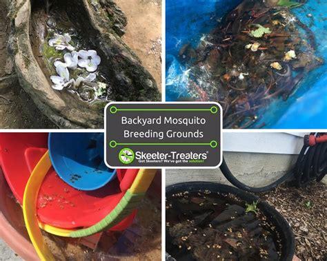 backyard breeding backyard breeding grounds for mosquitoes skeeter treaters