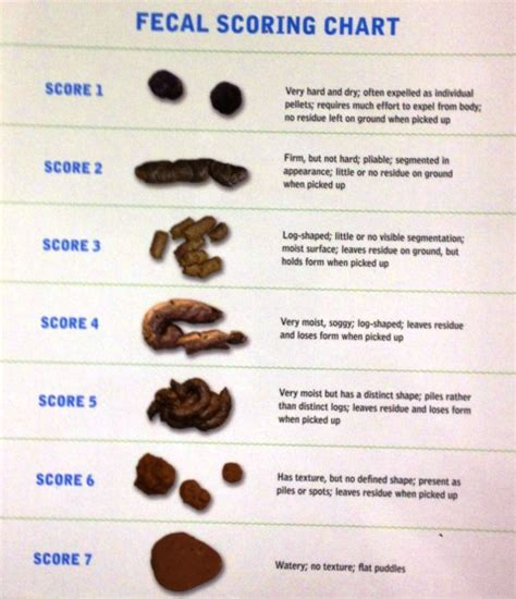 Human Stool Types by Purina S Fecal Scoring Chart The Family Vet