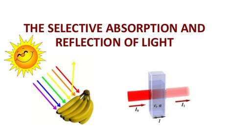 Absorption Of Light by The Absorption And The Selective Refraction Of Light The