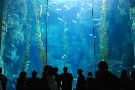 vancouver aquarium 50 new year better dating ideas los angeles january 1st 4th