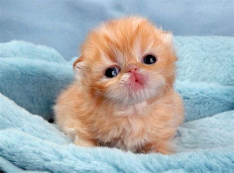 The Cutest Baby Animal Pictures Ever Taken