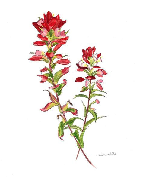 indian paintbrush tattoo best 25 indian paintbrush ideas on