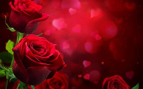 theme red rose download love images wallpaper collection for free download