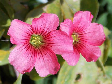 Fleurs De Printemps by Image De Printemps Fleur Id 233 E D Image De Fleur