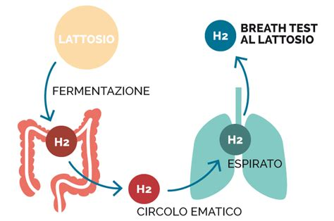 breath test lattosio preparazione breath test lattosio