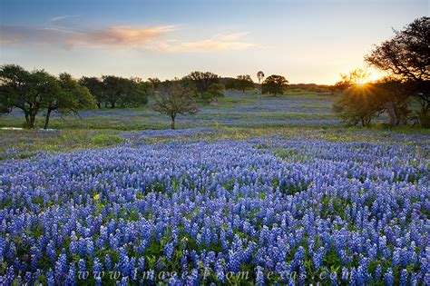 Which County Is Marble Falls - bluebonnet in the country 1 hill country