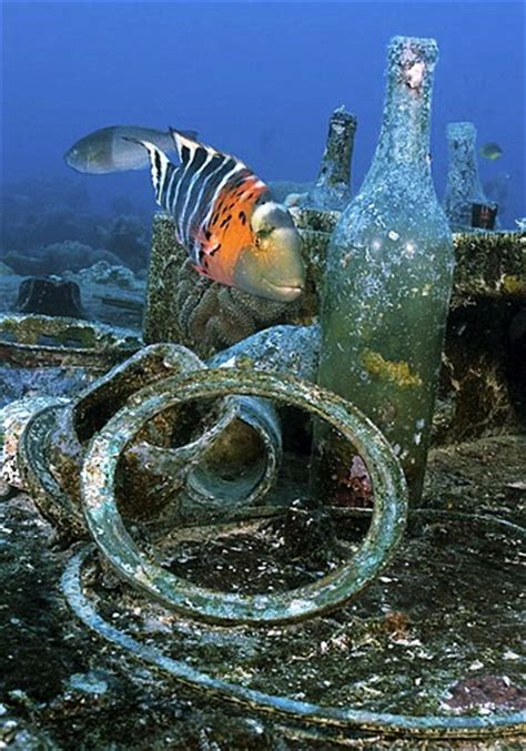 truk micronesia diving holidays  liveaboards divequest