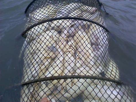 diy fish trap catfish traps designs quotes
