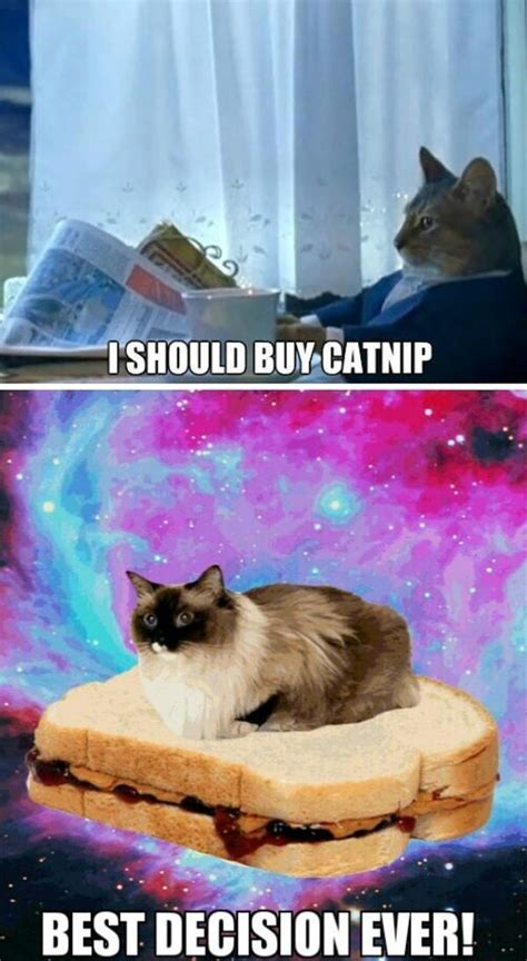 Cat Meme I Should Buy A Boat - image 614480 i should buy a boat cat know your meme