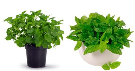 office plant decoration kl best office plants for work productivity fact about plant