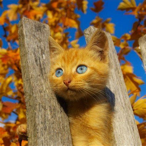 Yellow Cat yellow cat www pixshark images galleries with a bite