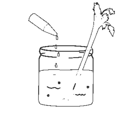 celery experiment with food coloring coloring pages