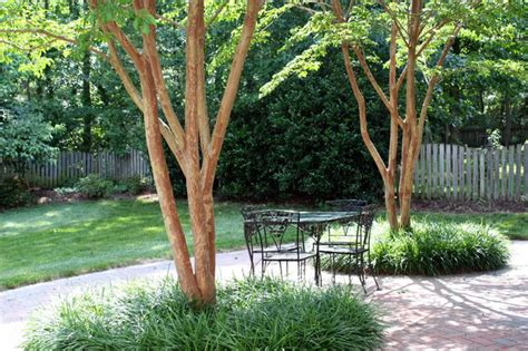 good trees for small backyards 5 best behaved trees to grace a patio