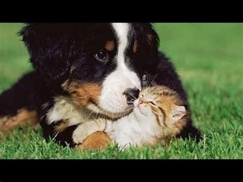 imagenes de niños jugando con animales videos de risa animales gatos y perros jugando nuevo