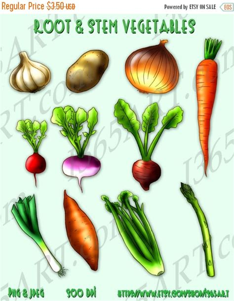 list of root vegetables 50 sale root and stem vegetables clipart by i365art