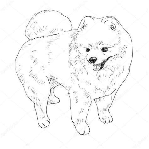 boo the pomeranian coloring pages coloring pages
