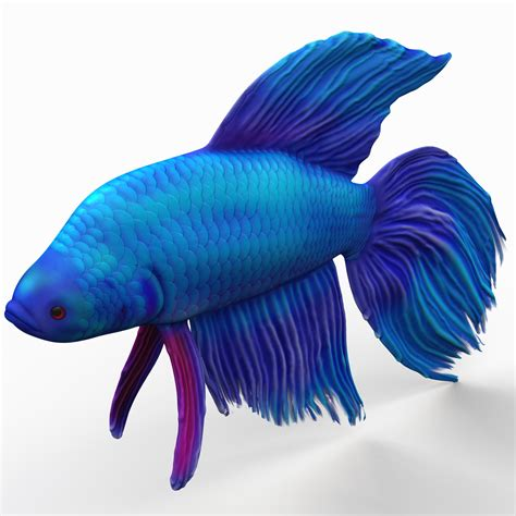 animates betta design aquarium mono 3ds max betta fish