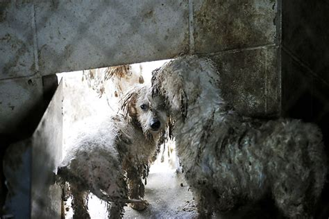 puppy mills in colorado nearly 300 dogs seized in top puppy mill state this s