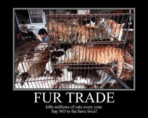 The Anti Fur Mob They Can P by 113 Best Anti Fur Stop The Fur Trade Worldwide Images On