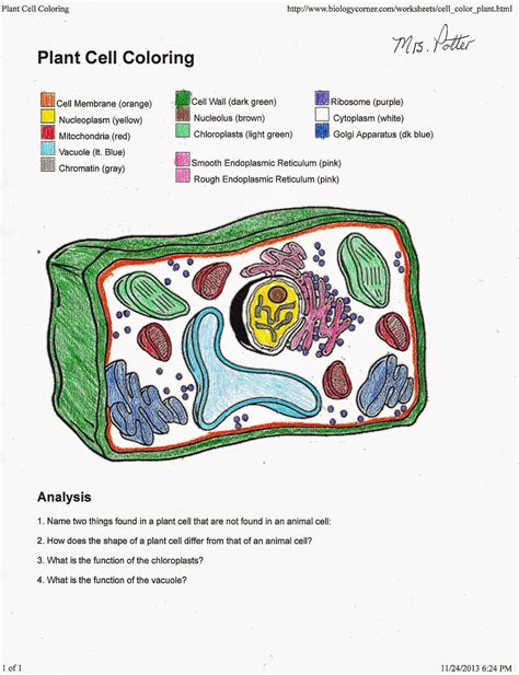 plant cell coloring page key plant cell coloring sheet free coloring sheet